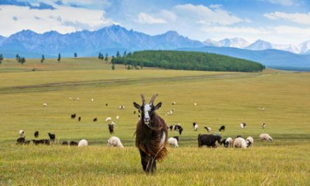Mongolia: How sustainable cashmere is reversing land degradation in Mongolia